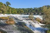 Rhine Falls In Summer