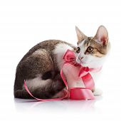 Kitten With A Pink Tape.