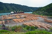 Pine Log Exporting At Picton, New Zealand