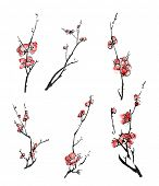 Collection of Chinese ink painting, plum blossom branches on white background.
