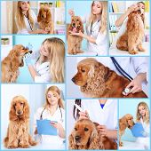 Collage of dog at vet
