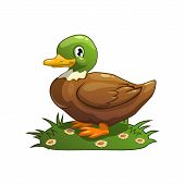 Cartoon vector duck