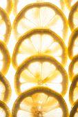 Постер, плакат: Lemons backlit