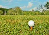 Golf Ball On Orange Tee In Beautiful Green Grass At Golf Club