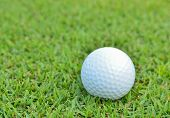 Golf Ball On Beautiful Deep Green Grass
