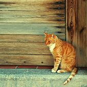 Greek red cat in wood doorway at the old greek village