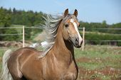 Amazing Stallion Running On Summer Pasturage