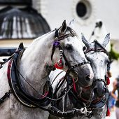 Horses And Carts On The Market In Krakow, Poland.