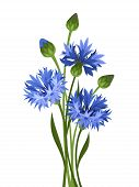 Bouquet of blue cornflowers. Vector illustration.