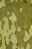 Tree Bark, Background, Texture