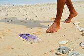 Jellyfish At The Beach