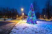 Christmas tree lights in the park, Zakopane in Poland