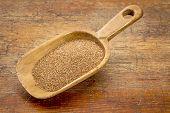rustic wooden scoop of gluten free teff grain against grunge wood background