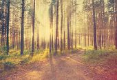 beautiful sunset in the woods, retro film filtered, instagram style
