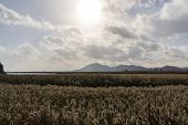 Suncheon bay