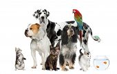 stock photo of petting  - Group of pets standing in front of white background studio shot - JPG
