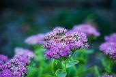 Wedding Rings On A Purple Flower
