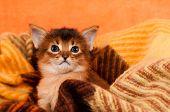 Adorable Kitten In Palid