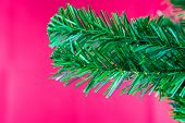 Fir Branch Isolated On Red