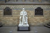 LONDON, UK - DECEMBER 11: Statue of Charles Darwin at the Natural History Museum. December 11, 2014 in London.