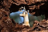 pic of hollow  - A white deer laying in the hollow of a tree - JPG