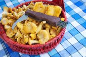 image of chanterelle mushroom  - Mushroom knife in a basket with Chanterelles - JPG