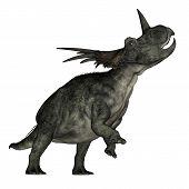 Styracosaurus dinosaur roaring - 3D render