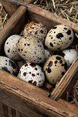 foto of quail egg  - Fresh quail eggs in a vintage wooden box - JPG