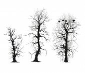 trees silhouettes isolated on white