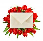 Fresh Red Tulips With Gift Card. Spring Flowers