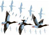 image of geese flying  - vector image of a flying flock of wild geese - JPG