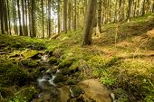 picture of sun flare  - Falls on the small mountain river in a forest in spring with light leak and sun flare - JPG