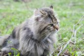 foto of mimicry  - not purebred cat outdoors - JPG
