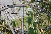 foto of wagon wheel  - Old wooden wagon wheel - JPG