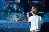 picture of crab  - Young man pointing a giant crab in a tank at the aquarium - JPG