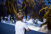 image of algae  - Young man looking at yellow algae in a tank at the aquarium - JPG