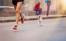 pic of dog tracks  - Unrecognizable young runner and a dog at the city race - JPG