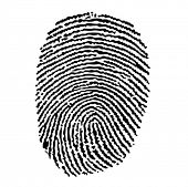 Vector of a finger print with high detail contours (EPS10)