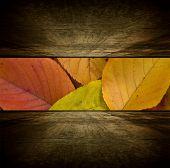 Autumn room.