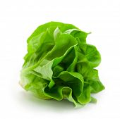 Fresh butterhead salad lettuce (also known as Boston, Bibb, Buttercrunch, and Tom Thumb, Arctic King