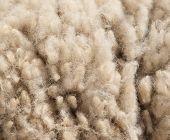 live iamb lambswool texture