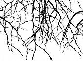 rama caída de árbol