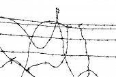 on the other side of wire - freedom or ...