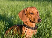 portrait of a dog in the rays of the setting sun
