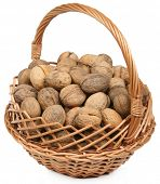 image of vulva  - Basket of brown walnuts on white background - JPG