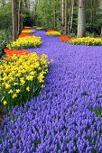 Fower bed, Keukenhof, the Netherlands