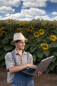 stock photo of land-mass  - farmer standing in front of a sunflower field with a laptop computer - JPG