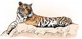 vector illustration of a tiger laying on a rock (hand drawing)