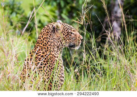 Africa Kenya Safari tour