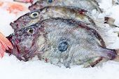 stock photo of faber  - John Dory - JPG
